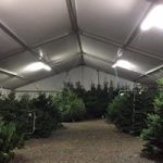 christmas trees dublin city