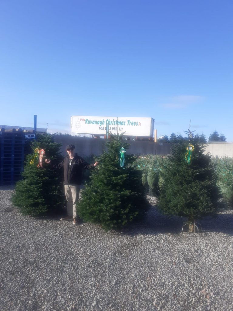 awarded by the irish christmas tree growers association