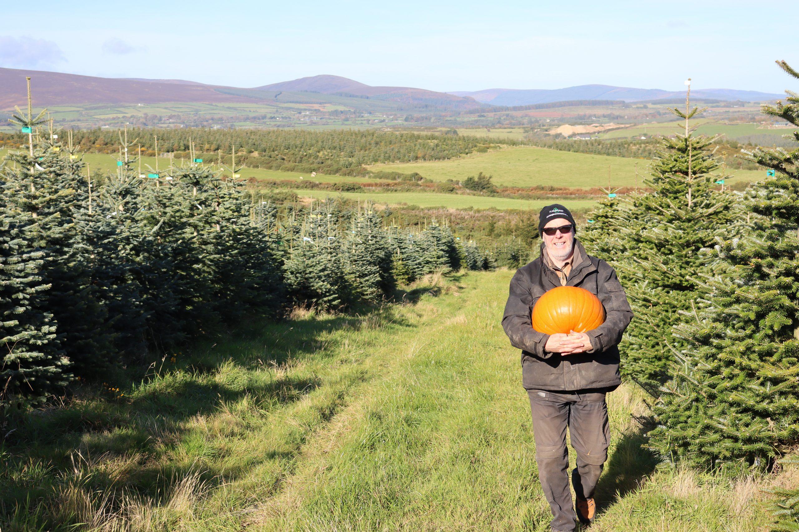 kavanagh christmas trees